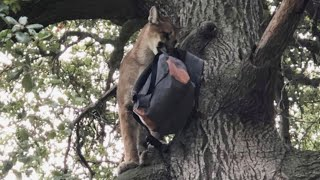 Dad Saves Son From Mountain Lion