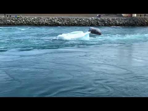 JTM Iceland Trip