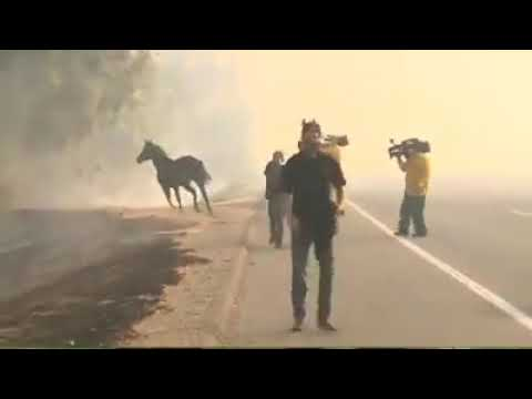 Reece - Horse Runs Back To Save Family From California Fire
