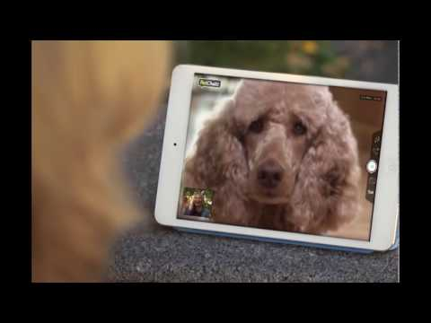 PetChatz - the opportunity to be there from anywhere!