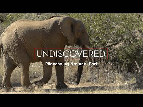 Undiscovered: Safari in Pilanesburg National Park, Johannesburg, South Africa