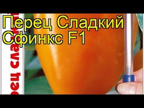 Перец сладкий Сфинкс F1. Краткий обзор, описание характеристик capsicum annuum Sfinks F1
