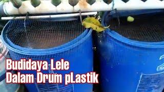 Ternak Lele Dalam Drum Plastik Agar Cepat Panen Youtube