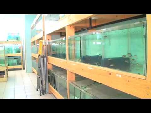 Exotic discount vente de poissons exotiques des for Vente poisson aquarium