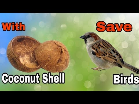 Best Out Of Waste | Bird Feeder from Coconut shell | Coconut Shell Craft Idea | Art n Creations
