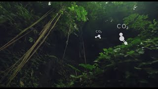 IOTA, Distributed Ledger Technology, in Protecting our Rainforests
