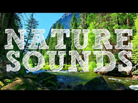 Water | Nature | Bird | Wind Chimes Sounds for Meditation | Relaxation