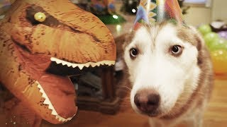 Laika the Husky's Surprise Dinosaur Birthday Party!