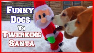 Pranking my Dogs with Twerking Santa Toy : Funny Dog Louie the Beagle