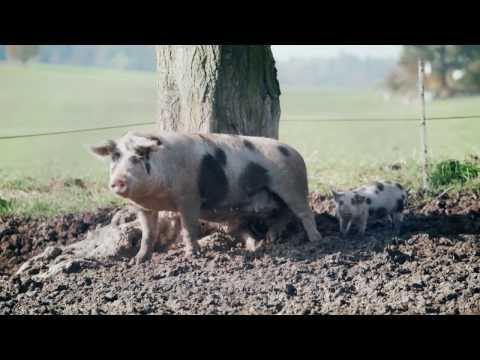 Bio Suisse Alles hängt irgendwie zusammen Schwein