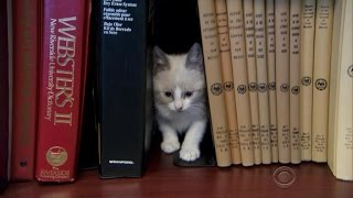 Government office sets up ''cat library''