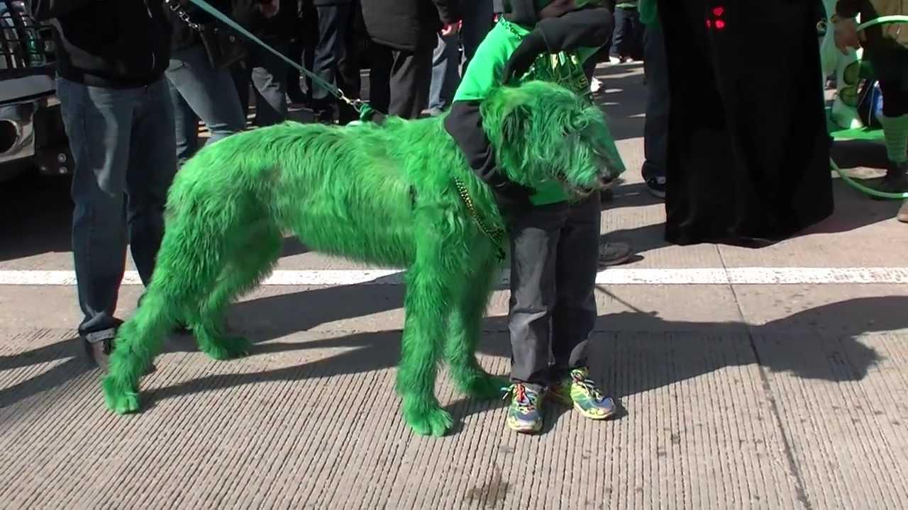 totally irish wolfhound - chicago st  patrick u0026 39 s day parade