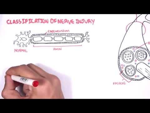 Neurology - Nerve Damage And Regeneration