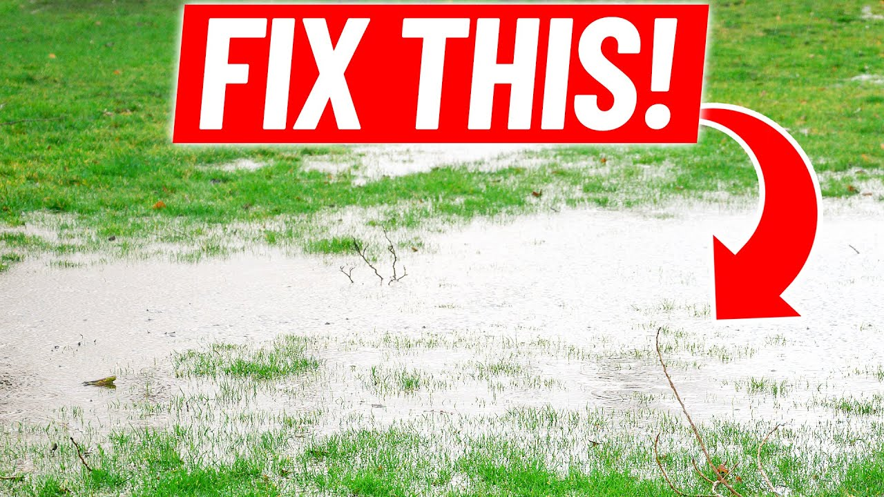 How To Fix Standing Water In The Lawn Low Spot Drainage With