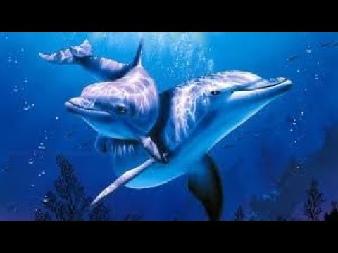 DOLPHINS & Soft Music 💦 Healing Relaxation - POWERFUL De-stressing - Deep REGENERATING Sleep