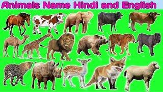 पालतू जानवरो के नाम हिंदी  | Learning Animals Names  | Animals Names Hindi and English