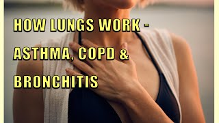 How Lungs Work - Asthma, COPD, & Bronchitis Cause & Cure