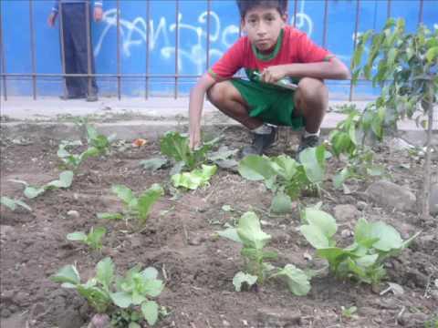 Cultivo de r banos org nicos en casa doovi for Como criar mojarra tilapia en casa