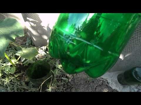 видео: Выращиваем огурцы: капельный полив под корень
