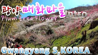 Plum town Walking Intro,Gwangy…