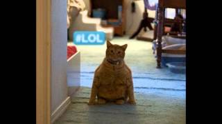 Ласковые и приятные кошки!
