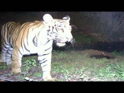 Wild Animals Hulchul in Adilabad Forest  - Watch Exclusive