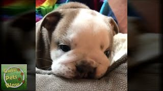 TRY Not to AWW! Cute and Funny Dog🐶 Videos 2019