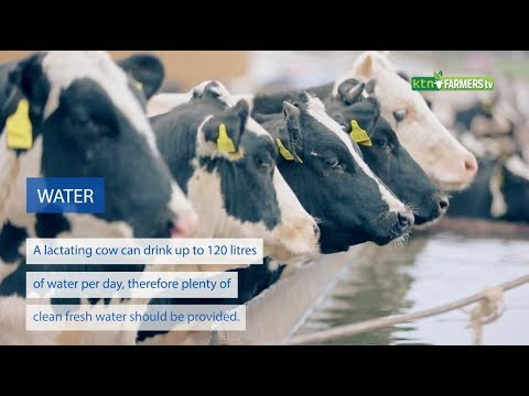 Tips for maximum milk production for dairy farmers : Farmers Tv