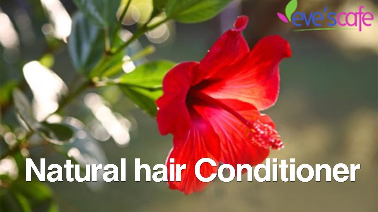 Diy Hibiscus Hair Conditioner Dry Hair Treatment Youtube