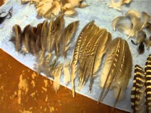 87be73decad77 my feather collection