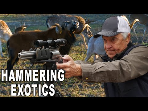 .50 Cal MANIA! Hunting Exotics In Texas