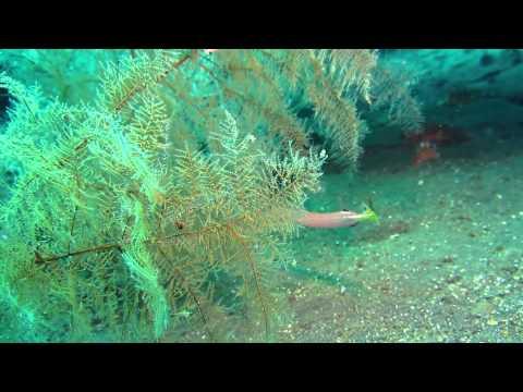 bunaken-island-(pulau-bunaken)-taman-laut-bunaken-diving-indonesia