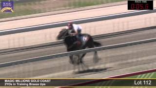 Lot 112 - 2YOs in Training Breezeup Thumbnail