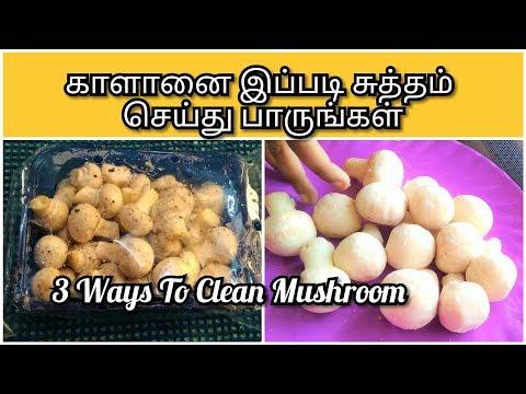 காளானை இப்படி சுத்தம் செய்து பாருங்கள் | How To Clean Mushrooms| Tips to Select & Preserve Mushrooms