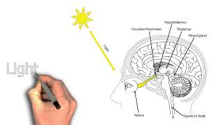 Why am I still so tired after sleep?