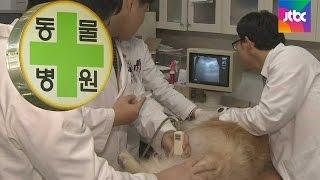 [꼼꼼한 경제] 동물 치료