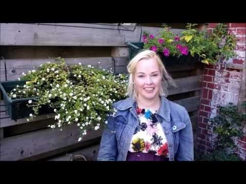 Urban vegetable garden: EPIC(ally funny) potato harvest & I NEARLY DIE