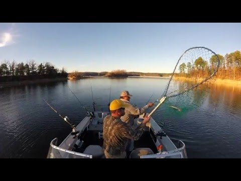 Beaver Lake Arkansas Striper Madness Fall 2015