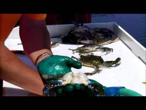 How To Clean A Blue Crab