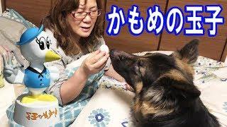 grandchild and German Shepherd dog 天才・たけしの元気が出るテレビで...