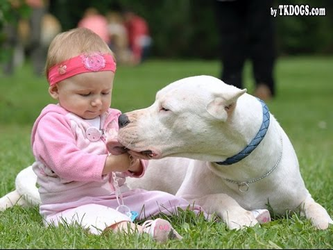 Dogo Argentino Dog Loving And Protecting Baby Compilation - Dog Loves Baby videos
