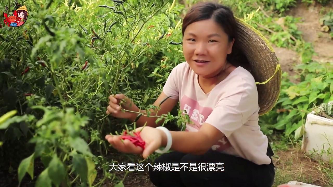 農村姑娘去菜園摘辣椒,媽媽拿去市場賣,朝天椒能賣4塊錢一斤 【漁小仙】 - YouTube