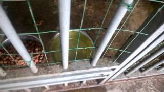 КОНЦЛАГЕРЬ для собак Хабаровск, в поилке моча вместо воды