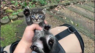 台風14号の突風で吹き飛ばされた子猫を保護した結果...