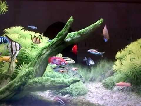 Acuario protector de pantalla aquarium peces ornamentales for Peces ornamentales para acuarios