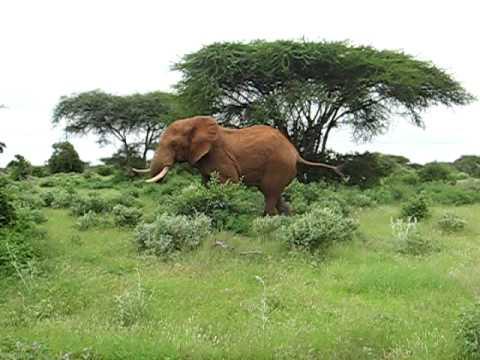 Kenya elefant run