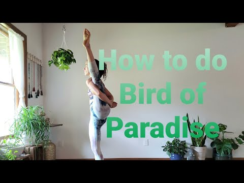 How to do Bird of Paradise Pose in Yoga
