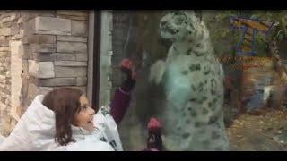 Funny ANIMAL VIDEOS compilation