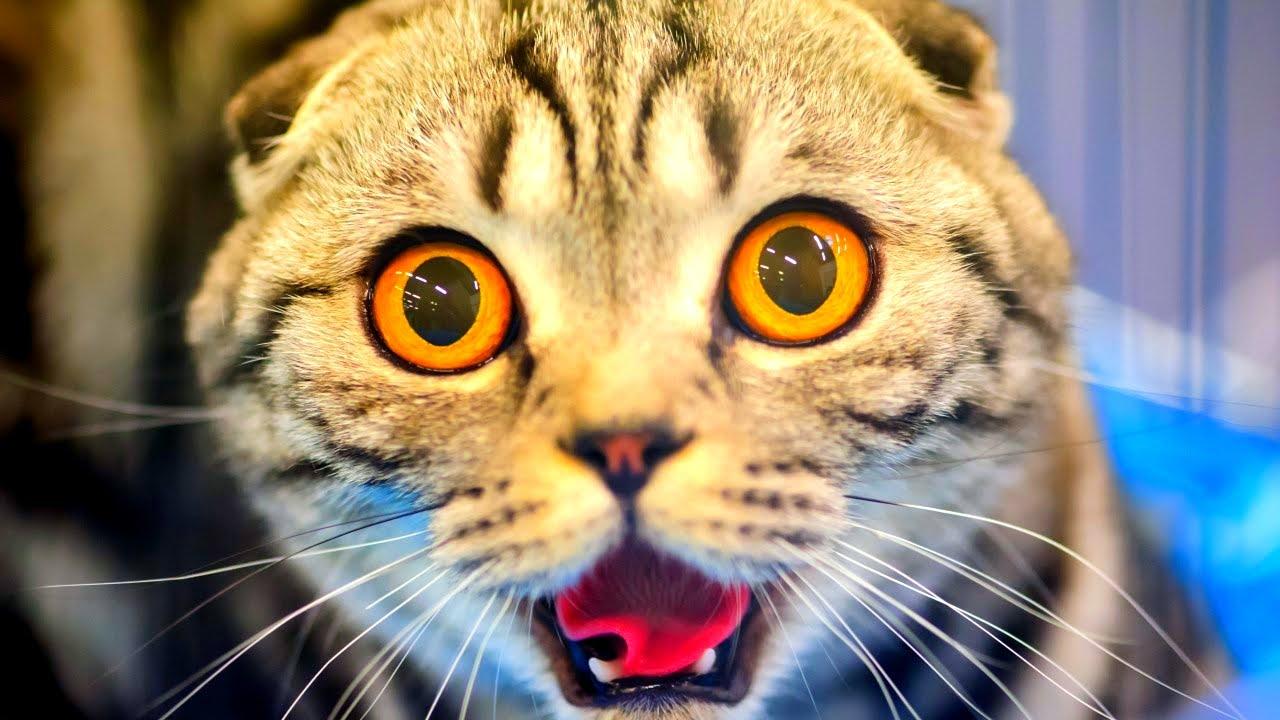 Что значат коты по сонникам и как понять значение сновидения новые фото