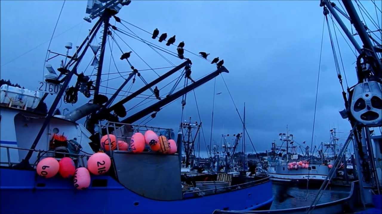 Bald eagles eating the bait on a fishing boat kodiak for Alaska fish counts